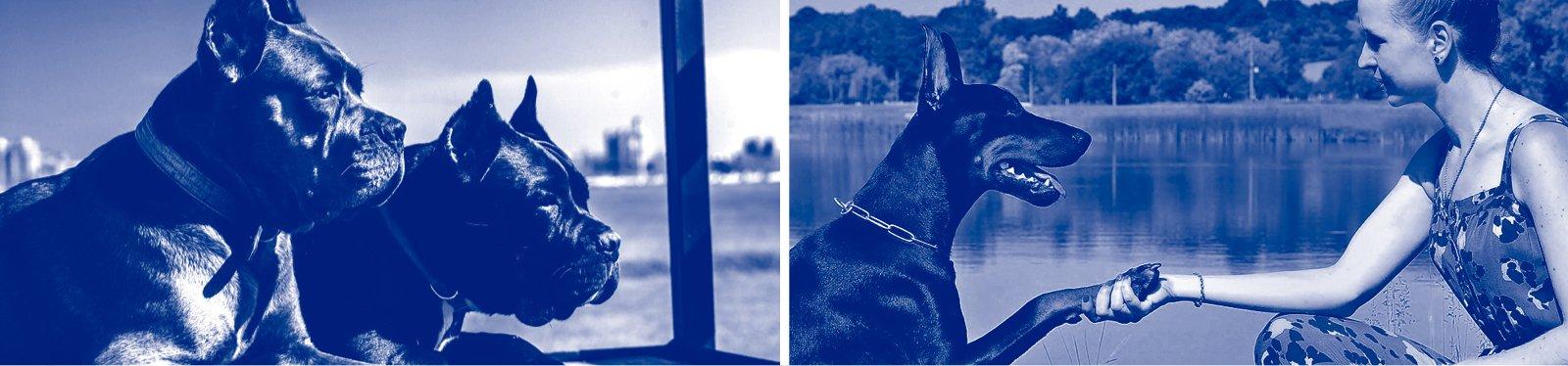 especialistas-en-entrenamiento-canino